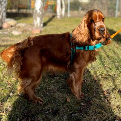 Chusta, bandana dla psa lub kota BASIC- czarna ORNAMI