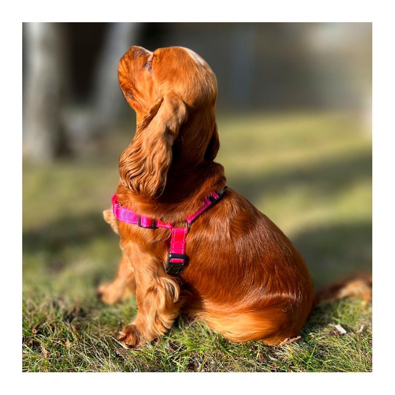 Legowisko do klatki kennelowej dla psa - WOLY zestaw 3 el.